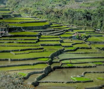 Korean rice paddy fields